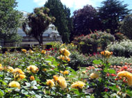 ハグレー公園のバラ園